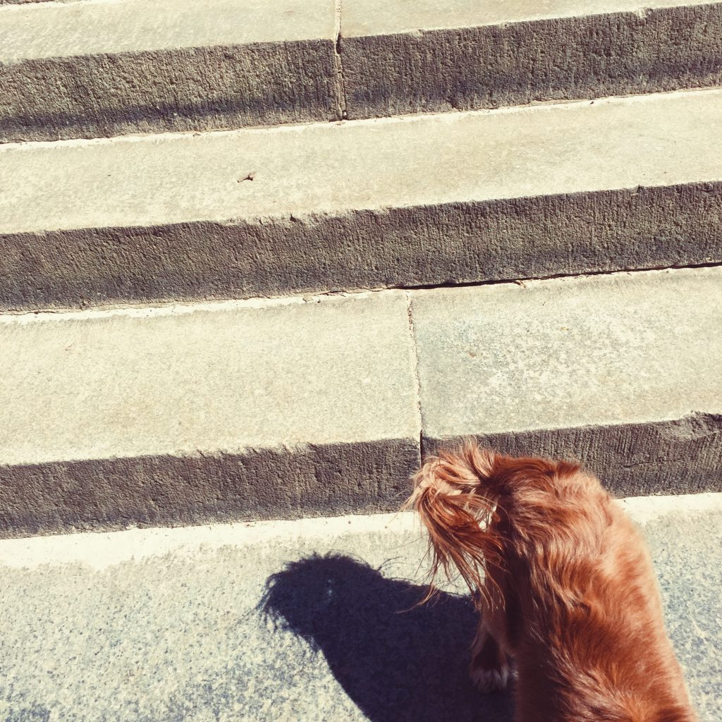 dog tail on stairs