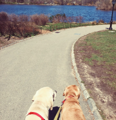two dogs walk in park