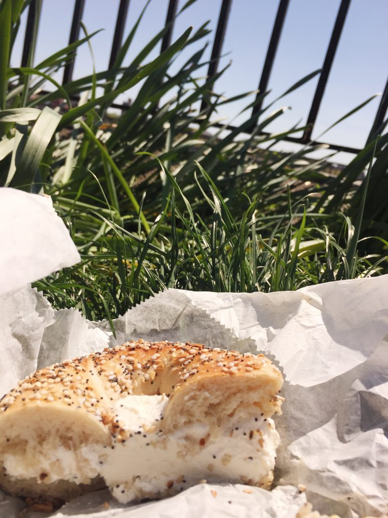 bagel grass picnic