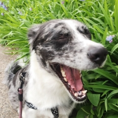 dog smile with flowers