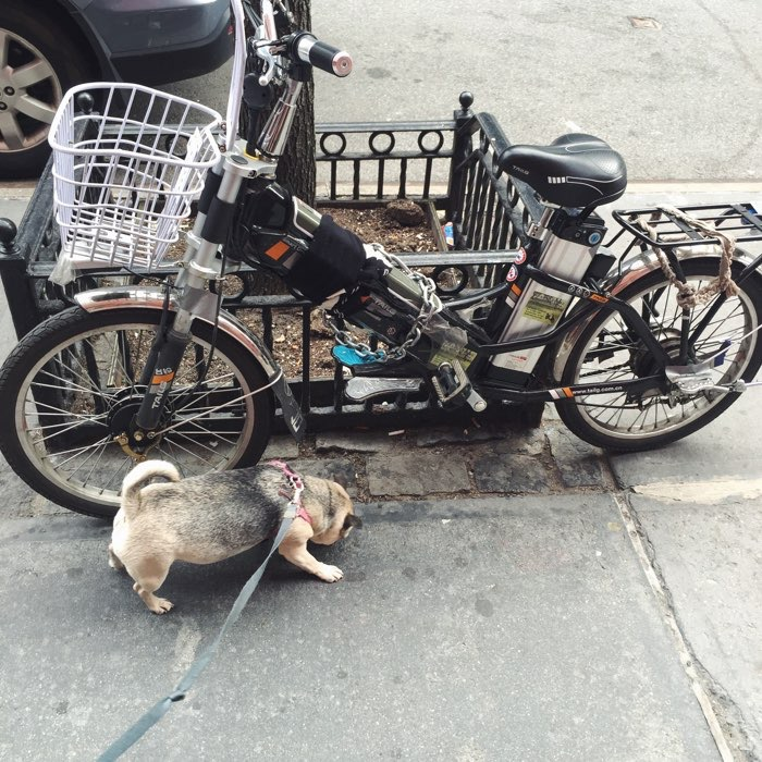 dog with bike