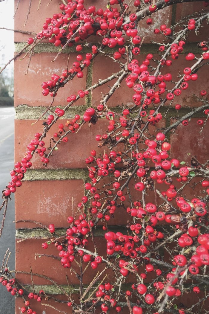 red berries on wall