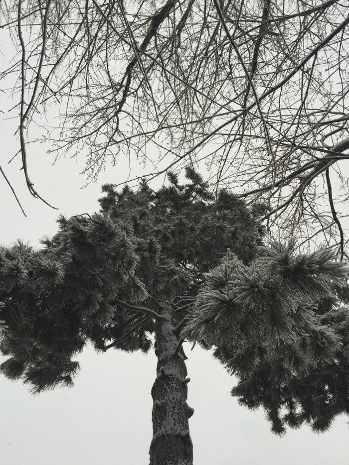 tree with snow branches