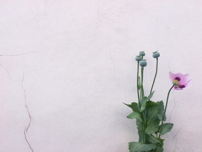 white wall flower