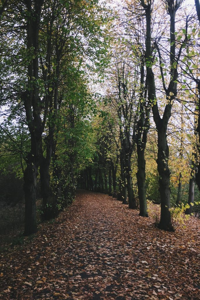 leaves on path in fall
