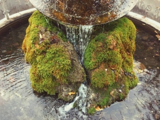 moss covered fountain water