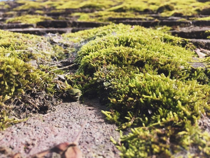 moss growing on roof