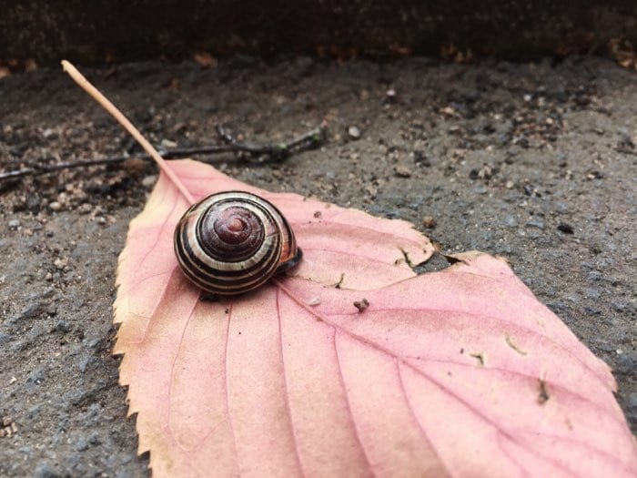 snail shell on red leaf